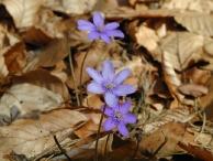 Wiosna 21