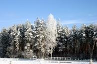Przyroda okolic Józefowa
