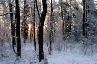 Zima 9